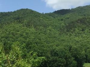 Beautiful mountain view.