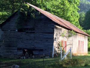 Sunlight as it shines on this barn. If you look closely, you can see a cow and a few goats.